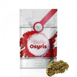 La Belle Osyris - Flora pas cher