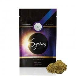 Syrius - Flora pas cher
